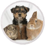 Pup, Guinea Pig And Rabbit Round Beach Towel