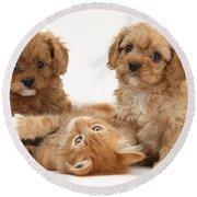 Puppies And Kitten Round Beach Towel