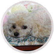 Puppy Dog Eyes Round Beach Towel