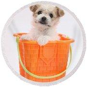 Puppy In Bucket Round Beach Towel