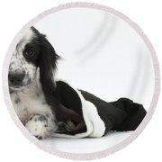 Puppy In Christmas Hat Round Beach Towel