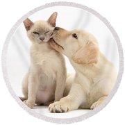 Puppy Licking Cat Round Beach Towel