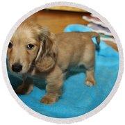 Puppy On Blue Blanket Round Beach Towel