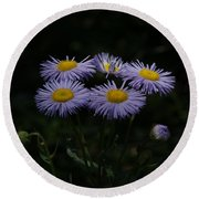 Purple Asters Round Beach Towel