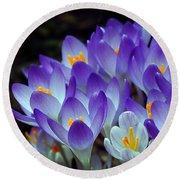 Purple Crocus Cluster Spring Choir Round Beach Towel