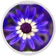Purple Daisy Photoart Round Beach Towel