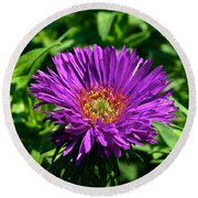 Purple Dome New England Aster Round Beach Towel