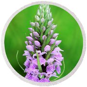 Purple Early Morning Orchid Round Beach Towel