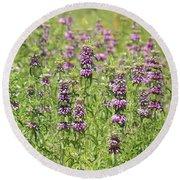 Purple Flower Field Round Beach Towel