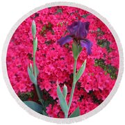 Purple Iris In Pink  Round Beach Towel