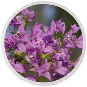 Purple Of The Bougainvillea Blossoms Round Beach Towel
