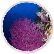 Purple Sea Fan In Raja Ampat, Indonesia Round Beach Towel