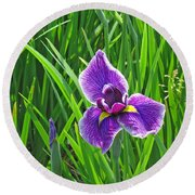 Purple Water Iris Round Beach Towel