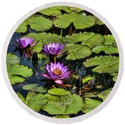 Purple Water Lilies - Nymphaea Capensis  Round Beach Towel