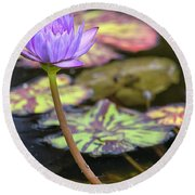 Purple Water Lilly Round Beach Towel