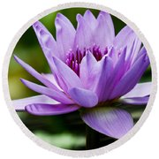Purple Petals Water Lily Round Beach Towel