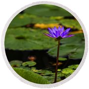 Purple Waterlily Round Beach Towel