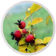 Pyracantha Berries Life Round Beach Towel