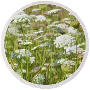 Queen Anne's Lace In All Its Glory Round Beach Towel