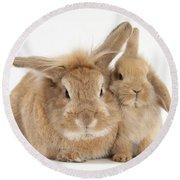 Rabbit And Baby Rabbit Round Beach Towel