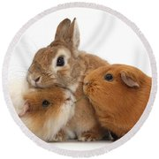 Rabbit And Guinea Pigs Round Beach Towel