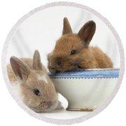 Rabbits And China Bowl Round Beach Towel