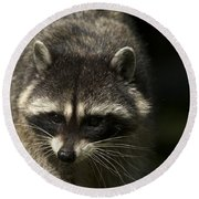 Raccoon 2 Round Beach Towel