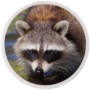 Raccoon Portrait Round Beach Towel