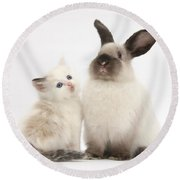 Ragdoll-cross Kitten And Young Round Beach Towel