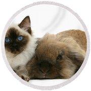 Ragdoll Kitten And Lionhead Rabbit Round Beach Towel