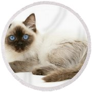 Ragdoll Kitten Round Beach Towel