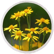 Ragwort Round Beach Towel