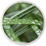 Rain Drops On Grasses Round Beach Towel