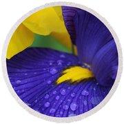 Raindrops Purple Dutch Iris Flower Round Beach Towel