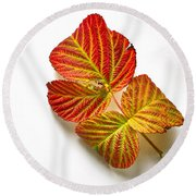 Raspberry Leaves In Autumn Round Beach Towel