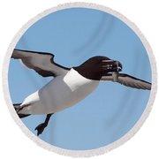 Razorbill In Flight Round Beach Towel by Bruce J Robinson