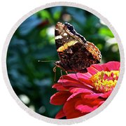 Red Admiral Probocis Round Beach Towel