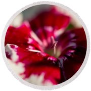 Red And White Dianthus Round Beach Towel
