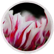 Red And White Tulips In Holland Round Beach Towel