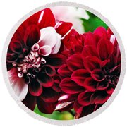 Red And White Variegated Dahlia Round Beach Towel