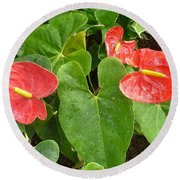 Red Anthurium Round Beach Towel