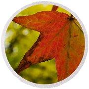Red Autumn Leaf Round Beach Towel