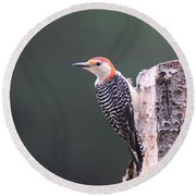 Red-bellied Woodpecker - Looking For Food Round Beach Towel