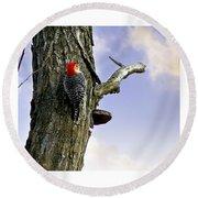 Red-bellied Woodpecker - Male Round Beach Towel