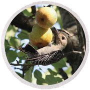 Red-bellied Woodpecker - Yummy Pears Round Beach Towel