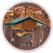 Red-bellied Woodpecker At Lunch Round Beach Towel
