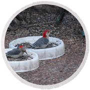 Red Bellied Woodpeckers Male And Female Round Beach Towel