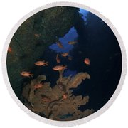 Red Bigeye Fish And Sea Fan In An Round Beach Towel by Mathieu Meur