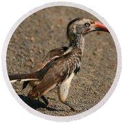 Red-billed Hornbill Round Beach Towel