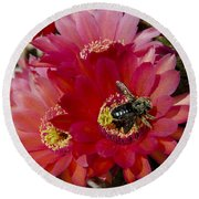 Red Cactus Flower With Bumble Bee Round Beach Towel